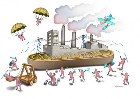 Shaw_illustration_mitochondria.jpg