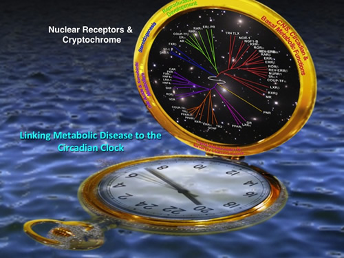 Linking Metabolic Disease to the Circadian Clock
