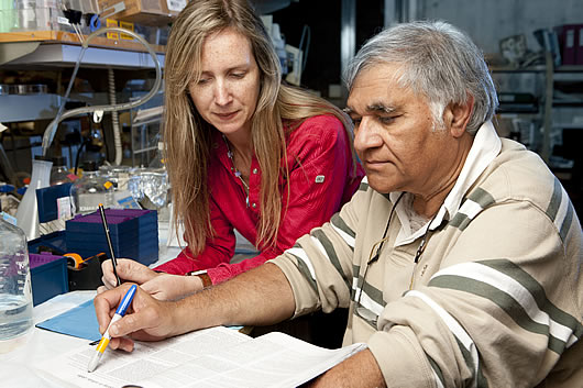 From left:  Postdoctoral researcher Dinorah Friedmann-Morvinski and  Inder Verma, professor in Salk's Laboratory of Genetics.