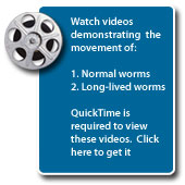Watch video of normal and long-lived worms