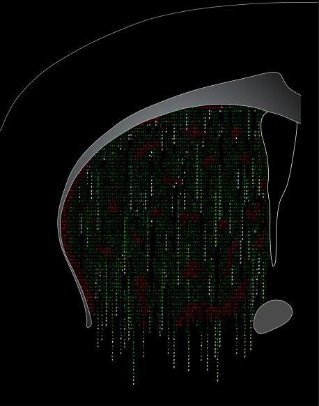 Welcome-to-the-matrix_no-ephys_no-title