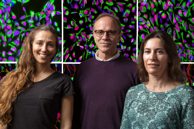 Salk Institute researchers Rusty Gage, Carole Marchetto and Shani Stern