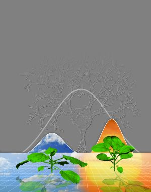 "Illustration represents how plants use the same rules to grow under widely different conditions (for example, cloudy versus sunny), and that the density of branches in space follows a Gaussian (""bell curve"") distribution, which is also true of neuronal branches in the brain."