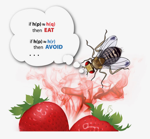 This illustration represents a fruit fly executing a similarity search algorithm based on odor.
