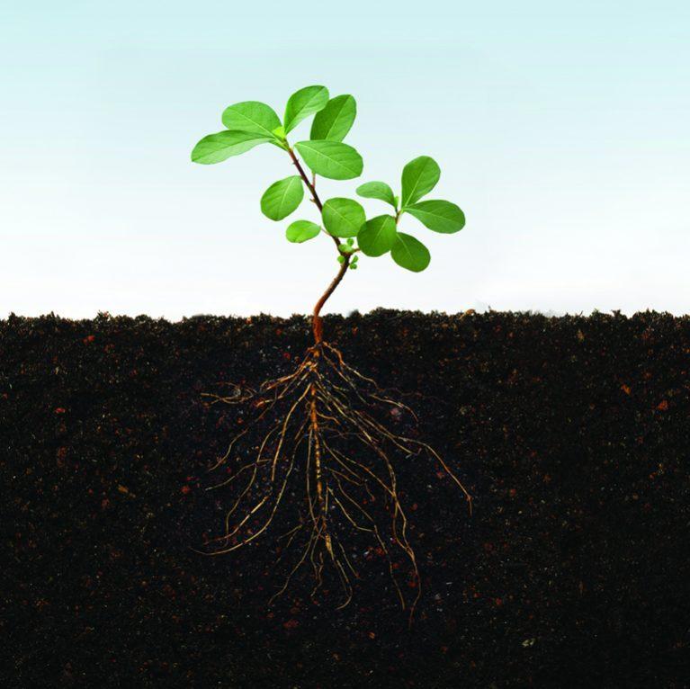 Ideal_Plants_bcknda-767×766