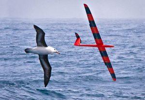 Bird & Glider