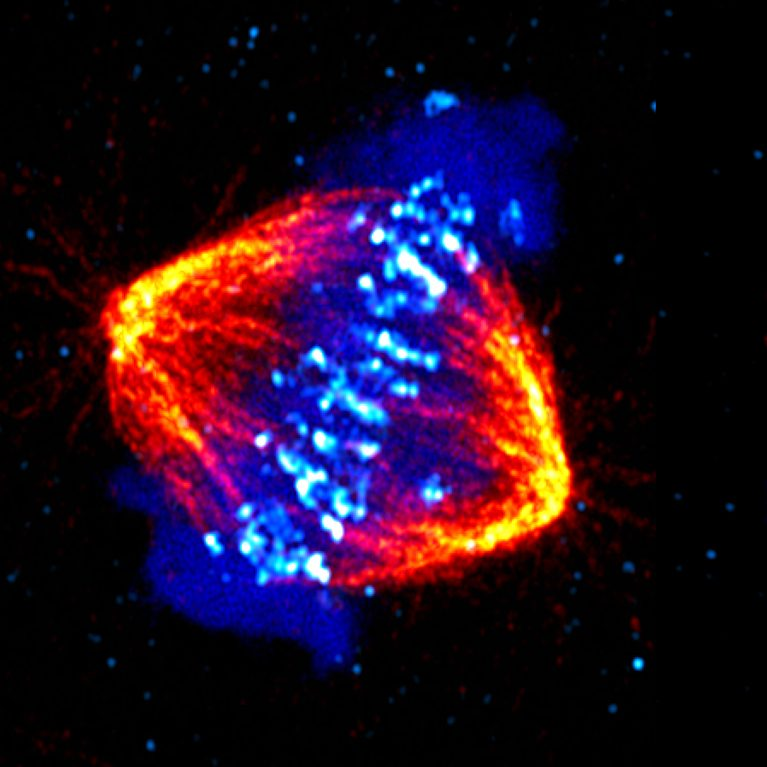 CDK_scienceimage12-767