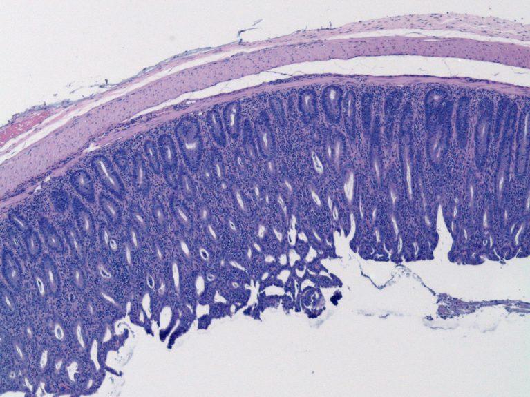 Salk Microscopy